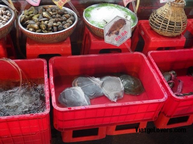 Tortugas para comer en el Night Market, Saigon