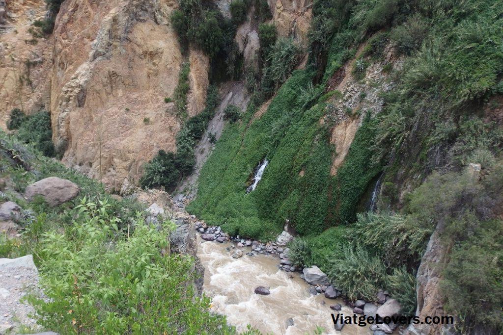 Justo antes de llegar al Oasis, empieza a haber vegetación y abundante agua
