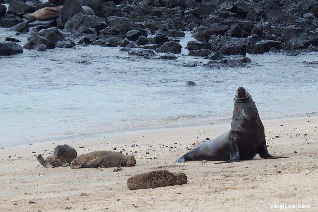 San Cristóbal, Galápagos -ViatgeLovers.com