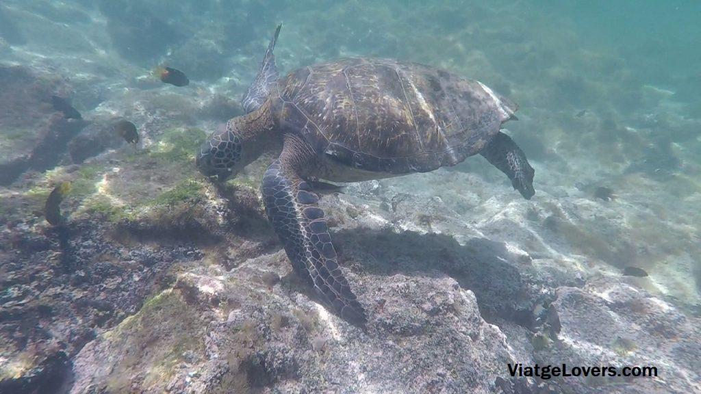 Concha de Perla, Galápagos -ViatgeLovers.com
