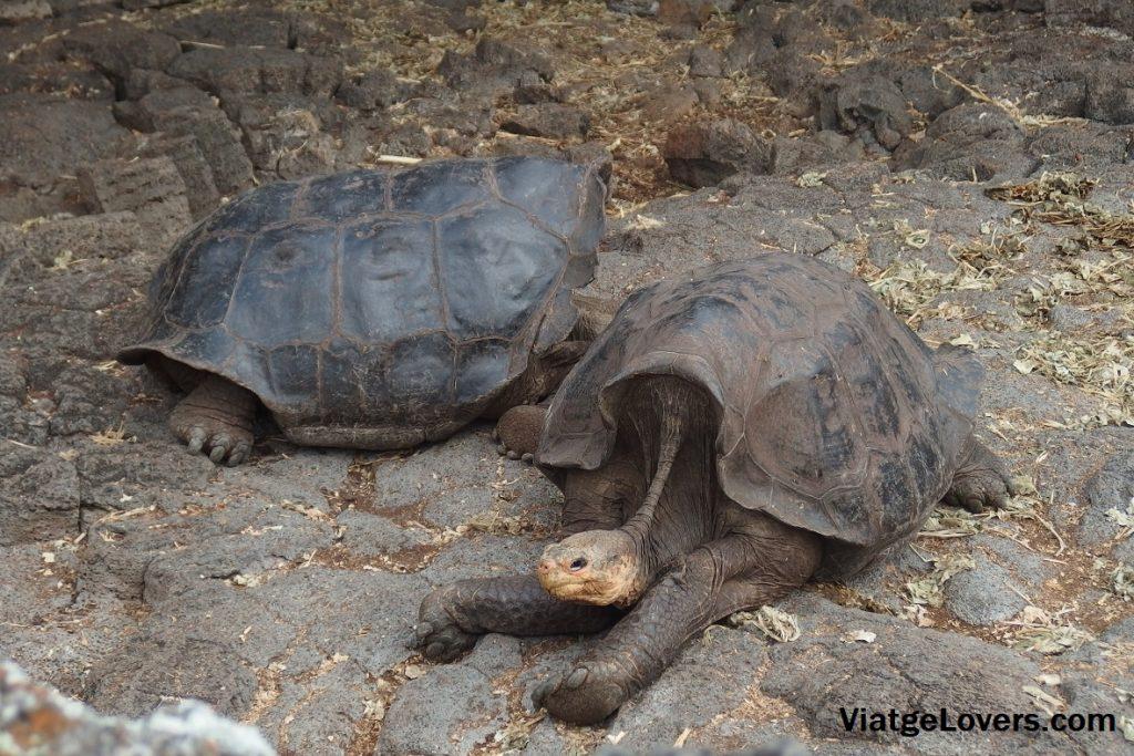 Fundación Charles Darwin, Galápagos -ViatgeLovers.com