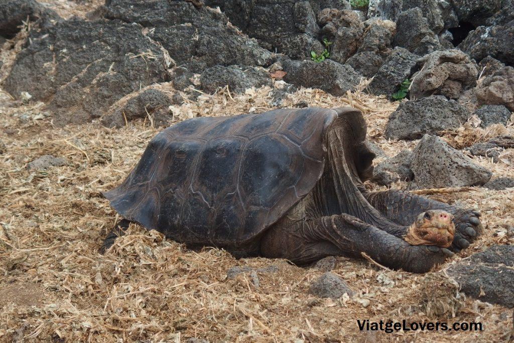 Totalmente espectacular esta tortuga