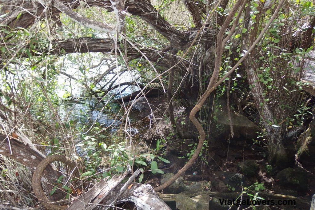 Mangle de agua dulce y de agua salada se unen en el Lago de las Ninfas