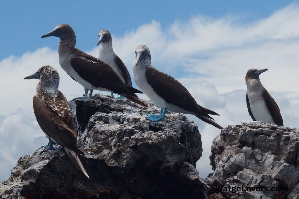 Tintoreras, Galápagos -ViatgeLovers.com