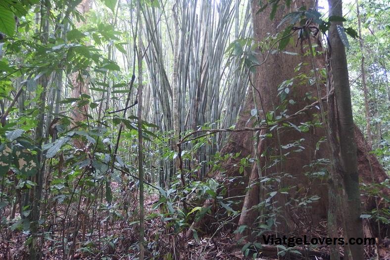 En plena jungla