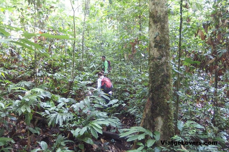 Adentrándonos en la selva de Ketambe con Buyung