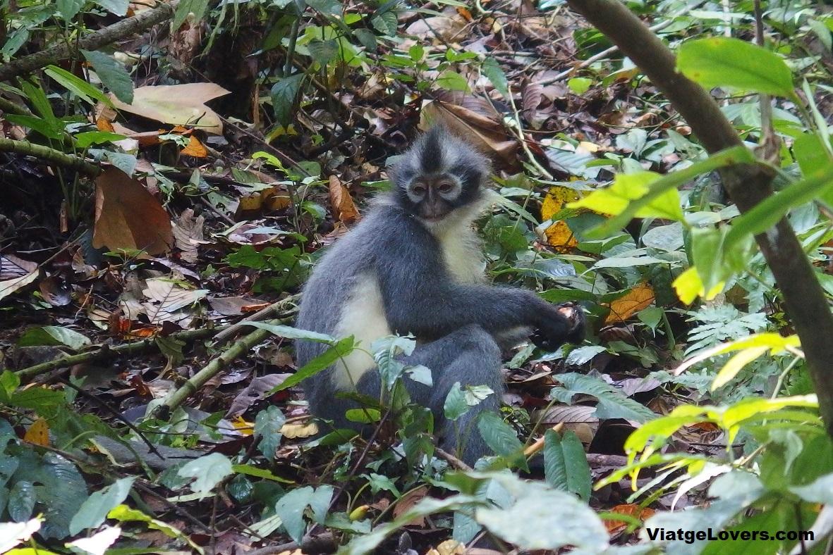 Impresionados con esta familia de primates