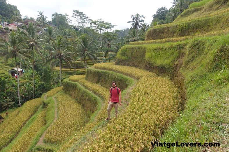 Terrazas de arroz, Bali. ViatgeLovers.com