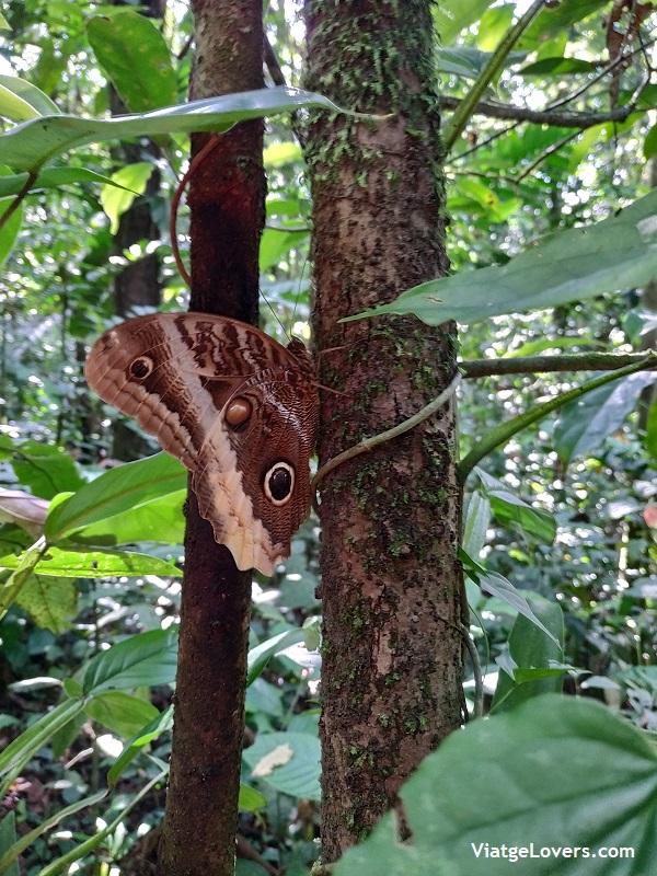 Arenal, Costa Rica -ViatgeLovers.com
