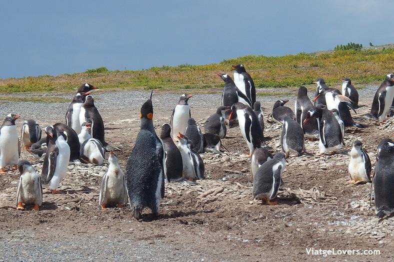 Isla Martillo, Patagonia -ViatgeLovers.com