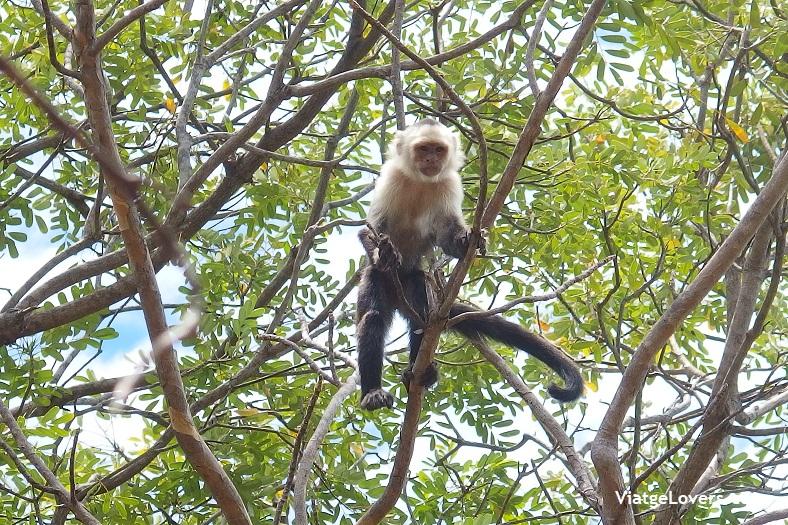 Santa Rosa, Costa Rica -ViatgeLovers.com