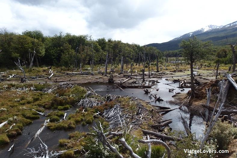 Tierra de fuego, Patagonia -ViatgeLovers.com