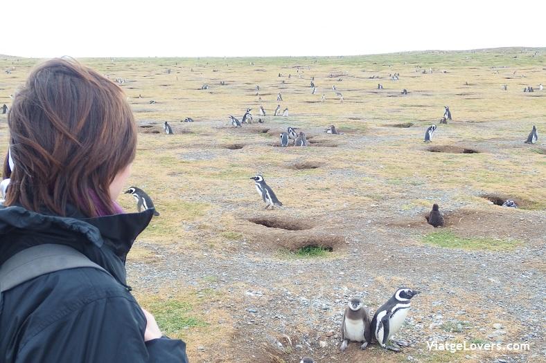 Isla Magdalena , Patagonia-ViatgeLovers.com