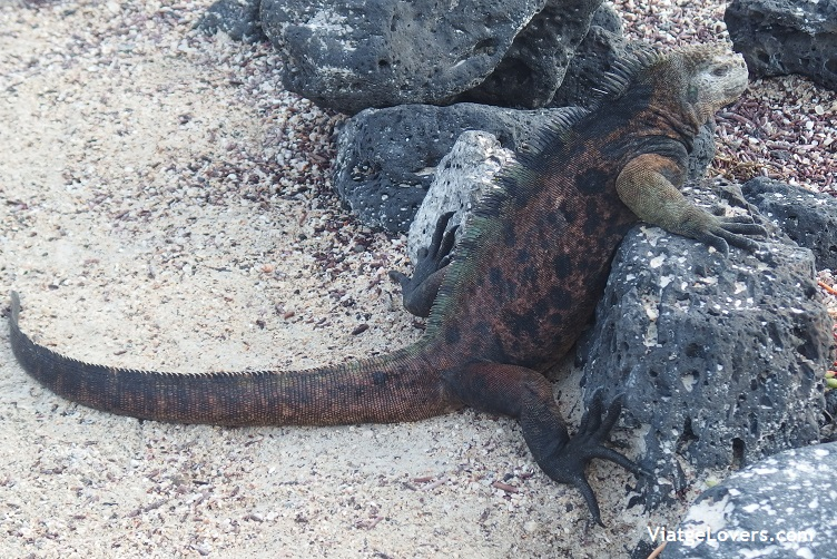 Galápagos -ViatgeLovers.com