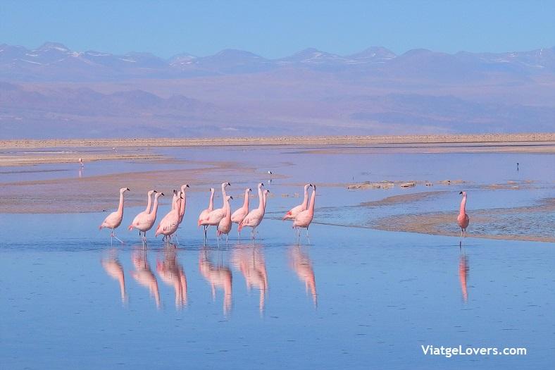 Lagunas Altiplánicas, ruta por el desierto de Atacama -ViatgeLovers.com