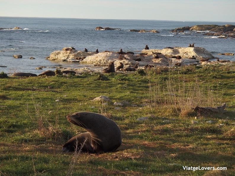 Nueva Zelanda, Oceanía por libre -ViatgeLovers.com