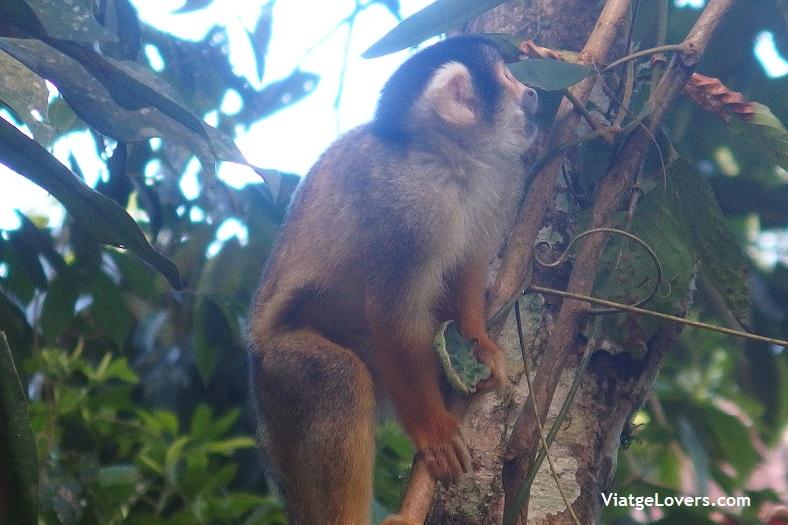 Villa Tunari, Bolivia -ViatgeLovers.com
