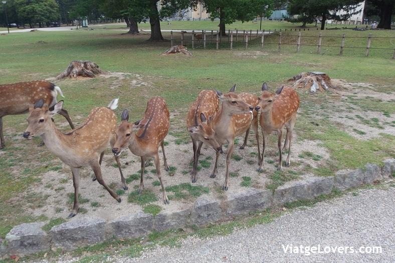 Nara. Japón -ViatgeLovers.com