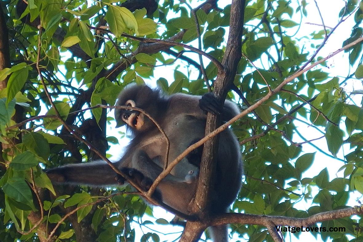 Fauna sorpresa. Tailandia -ViatgeLovers.com