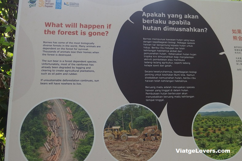 Bornean Sunbear Conservation Centre. Borneo -ViatgeLovers.com