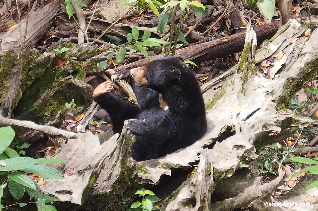 Malasia y Borneo. -ViatgeLovers.com
