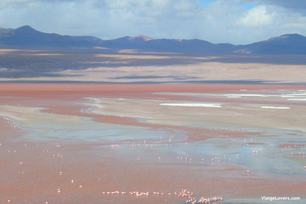 Laguna Colorada, Atacama, Bolívia. América-ViatgeLovers.com