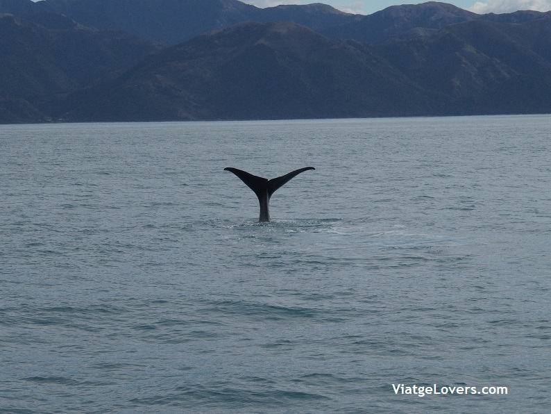 Nueva Zelanda -ViatgeLovers.com