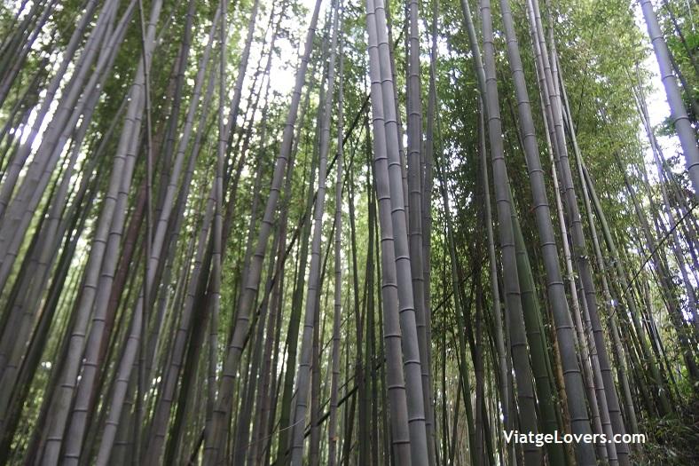 Arashiyama. Japón -ViatgeLovers.com
