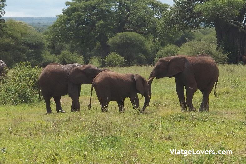 Tanzania -ViatgeLovers.com
