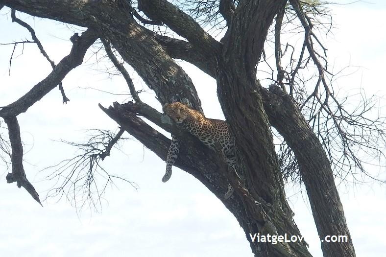 Ruta por Tanzania -ViatgeLovers.com