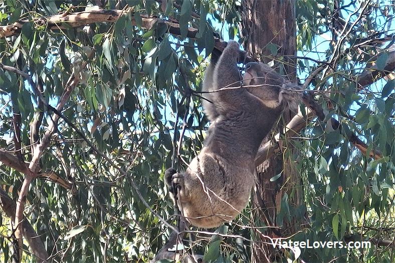 Australia por Libre -ViatgeLovers.com